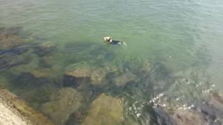 突然、堤防から飛び込み泳ぎだしました.