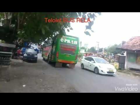 BUS telolet