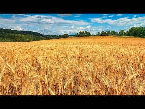 Зерно Он Лайн новости, аналитика и цены зернового рынка