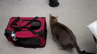 #inFURvention Tidus Loves his Carrier Thumbnail