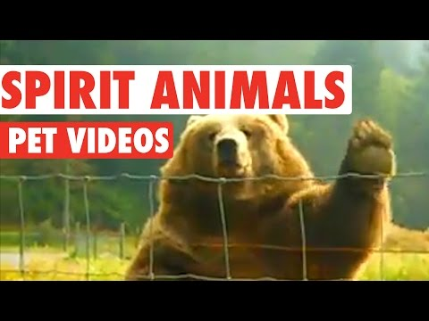 Hilarious Spirit Animals Video Compilation