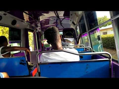 Barbados Reggae Bus Short