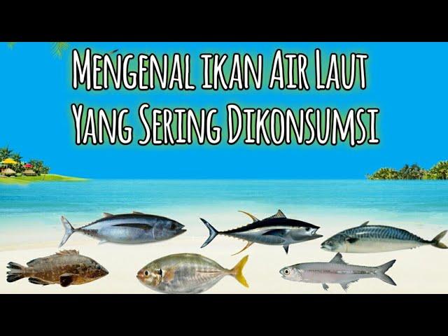 Mengenal Ikan Air Laut Yang Sering Dikonsumsi Youtube