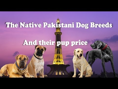 Pakistani Dog breeds and their price in Pakistan