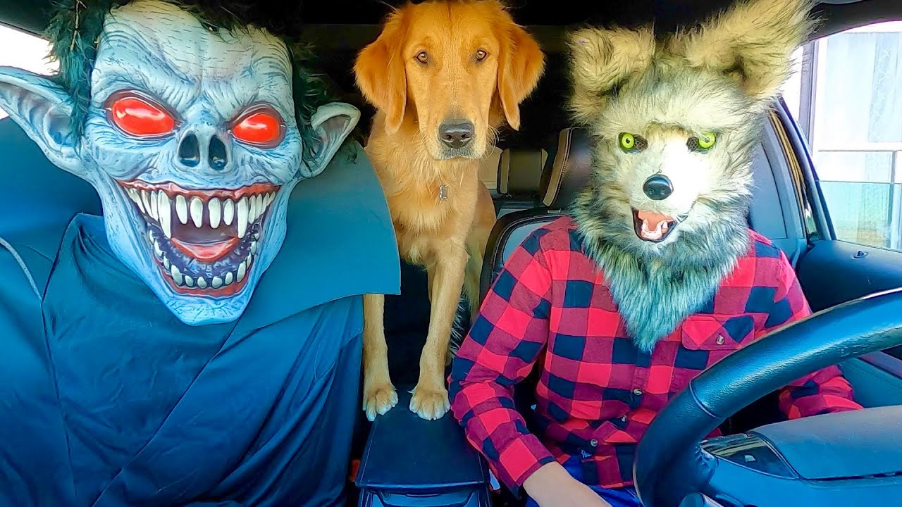 Wolf Surprises Vampire & Puppy with Car Ride Chase!