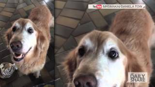 Watch This Dog's Reaction To Finding Out She Beat Cancer!