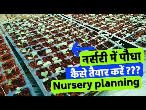 Seedling Nursery planning