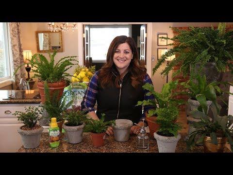 Houseplant Fern Care Guide! 🌿💚// Garden Answer