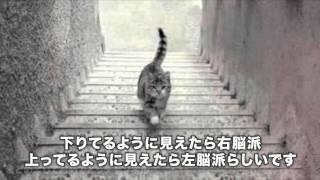 猫が階段を上っているようにも見えるし、下りているようにも見えるとい...