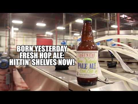 Born Yesterday Fresh Hop 2017 | Out Now!