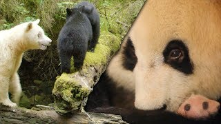 Most Inspiring Animal Family Moments | Top 5 | BBC Earth