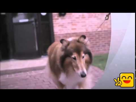 SEC Network - Take a deeper look at what it means to be Reveille's caretaker