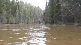 Рыбалка на хариуса с 9 июня по 19 июня 2013 года Рыбалка ловля хариуса сказочная тайга