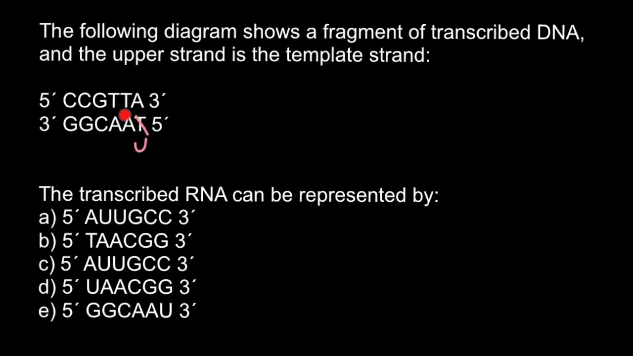 Template and coding strands of DNA - YouTube