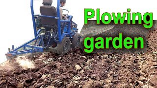 Plowing the garden on the homemade minitractor. Two Bottom Plow