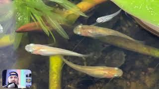 MINI DIY PATIO POND TOUR FROM JAPAN: Japanese Medaka Rice Fish Setup 2021