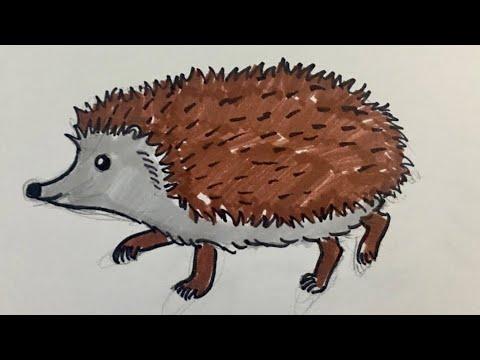 Kirpi resmi nasıl çizilir