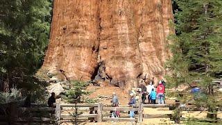 10 Największych drzew na świecie