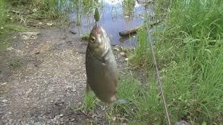 Рыбалка в Июле на маленькой речке