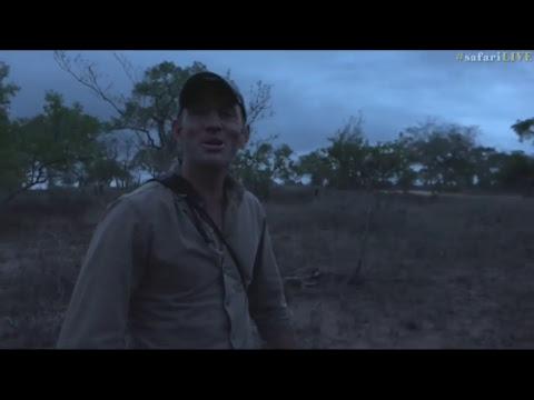 safariLIVE - Sunset Safari - Nov. 11, 2017