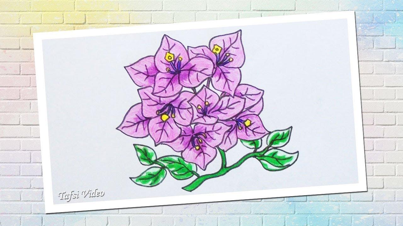 Cara Menggambar Bunga Kertas Yang Mudah Gambar Bunga Bougenville