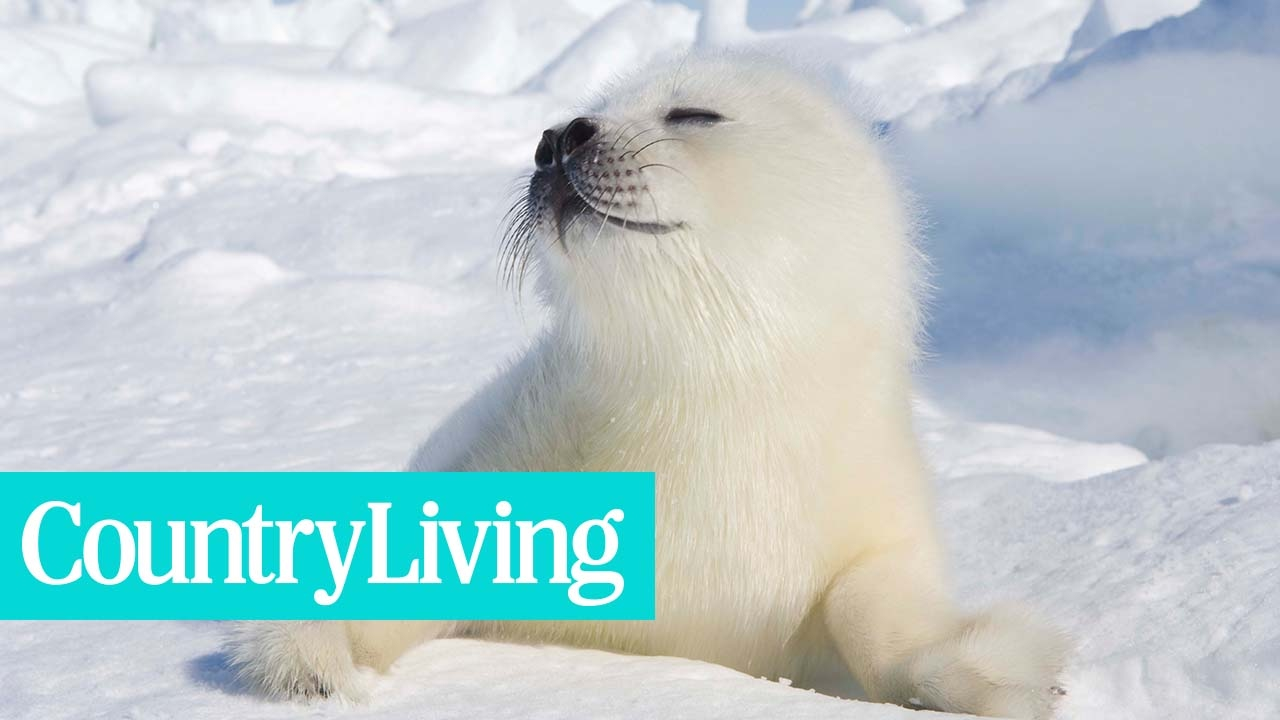 This British Island Will Pay You to Live There and Play with Baby Seals | Country Living
