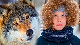 Мальчишка воспитал волчонка... И вот однажды преданный волк спас ему жизнь... Трогательная история.