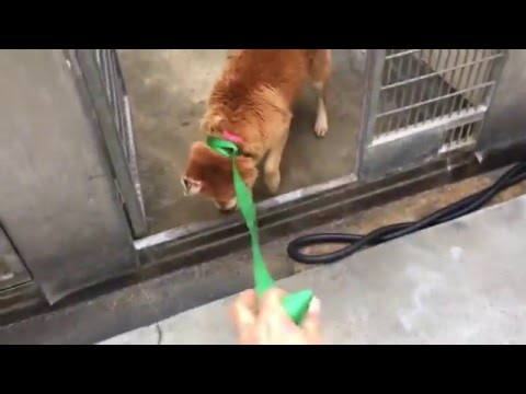 severely neglected Chow mix abandoned at shelter