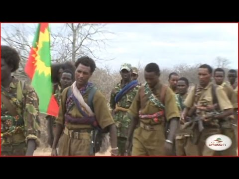 Oromo Liberation Front Army (WBO)
