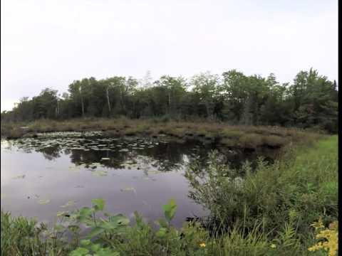Pond Drain