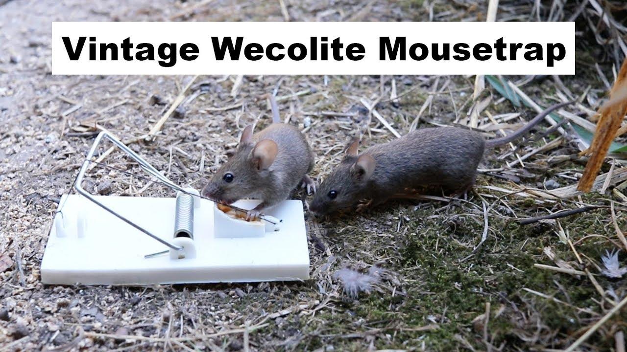 vintage-wecolite-mousetrap-from-1979-with-a-unique-trigger-mousetrap-monday