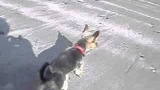 Yorkshire Terrier - Zwerge Mit Löwenherz Teil 2  On The Beach In Northern Ireland