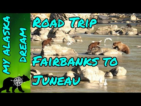 Road Trip Anchorage To Juneau (Denali And Brown Bears)