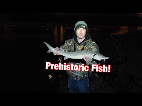 Night Sturgeon Fishing | North Saskatchewan River