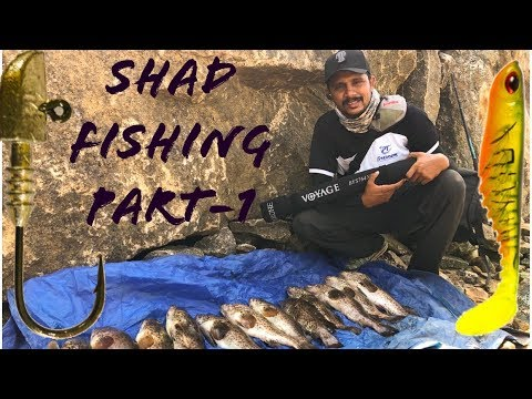 Shad Fishing Part-1 by tackle tips