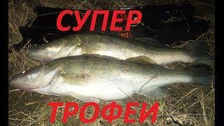 Трофейный Судак Тактика охоты Подводная охота 2020