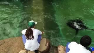 浜松市動物園 アシカ 餌 《T.T》
