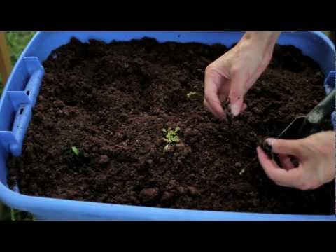How To Build A Carnivorous Plant Bog Garden