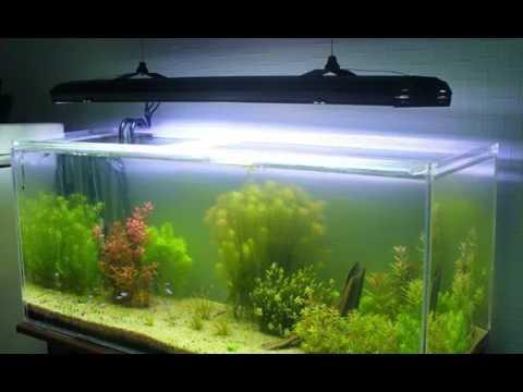 Перегрев воды в аквариуме, как охладить воду?