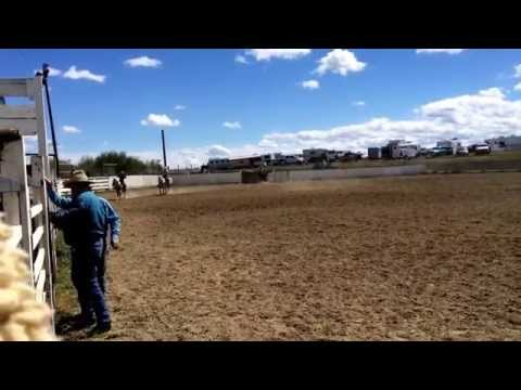Goldrush and Houston running calves out at White Swan high school rodeo