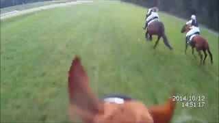 paardenrennen duindigt 12-10-2014