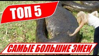 видео ТОП-8 Самые длинные змеи в мире