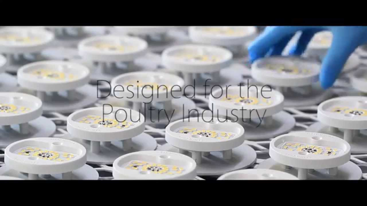 SUNBIRD LED poultry lighting  sc 1 st  YouTube & SUNBIRD LED poultry lighting - YouTube azcodes.com