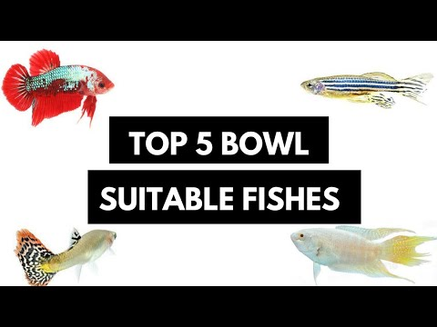 If You Have A Bowl, Then These Fishes Are The Best..!