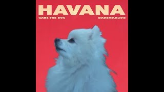 Gabe the dog - Havana