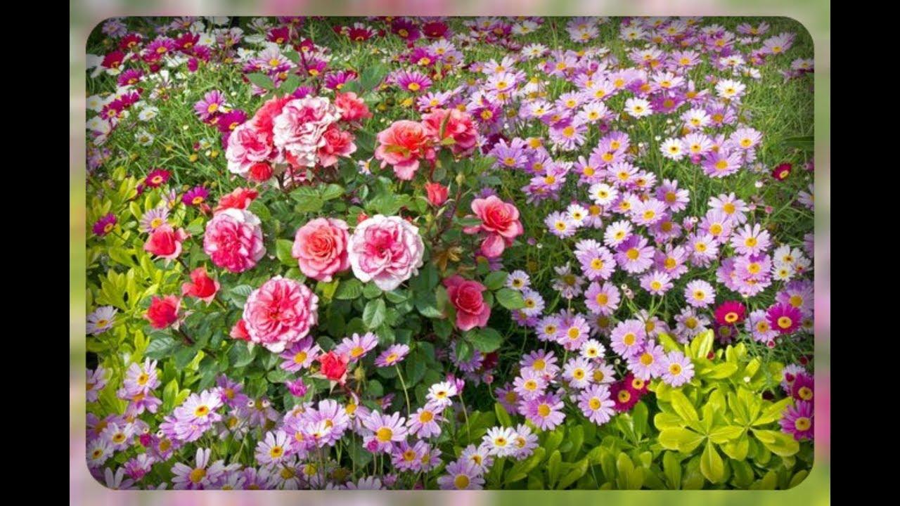 Памятка для цветоводов. Секреты цветения растений