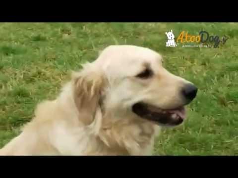 134423b4cb82 Dispositif de dressage de chien pour une portée de 250 m. Matthieu AtooDog