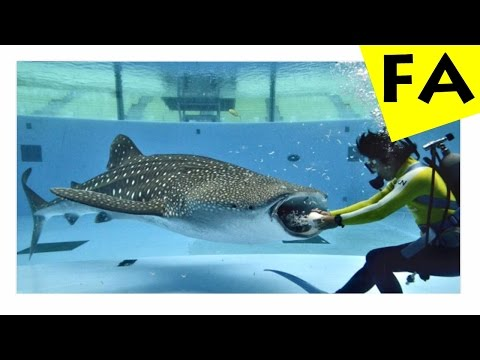 Top 10 most dangerous animals in the sea doovi for Largest saltwater fish