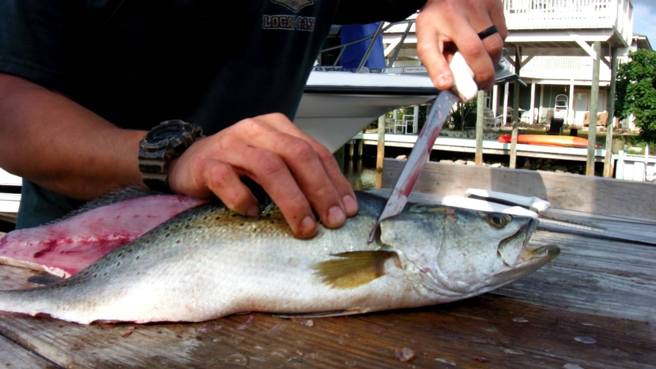 How To Clean A Speckled Trout Youtube
