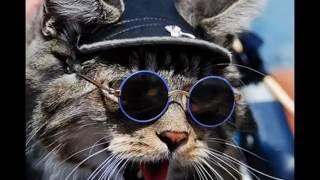 Эти милые кошки.